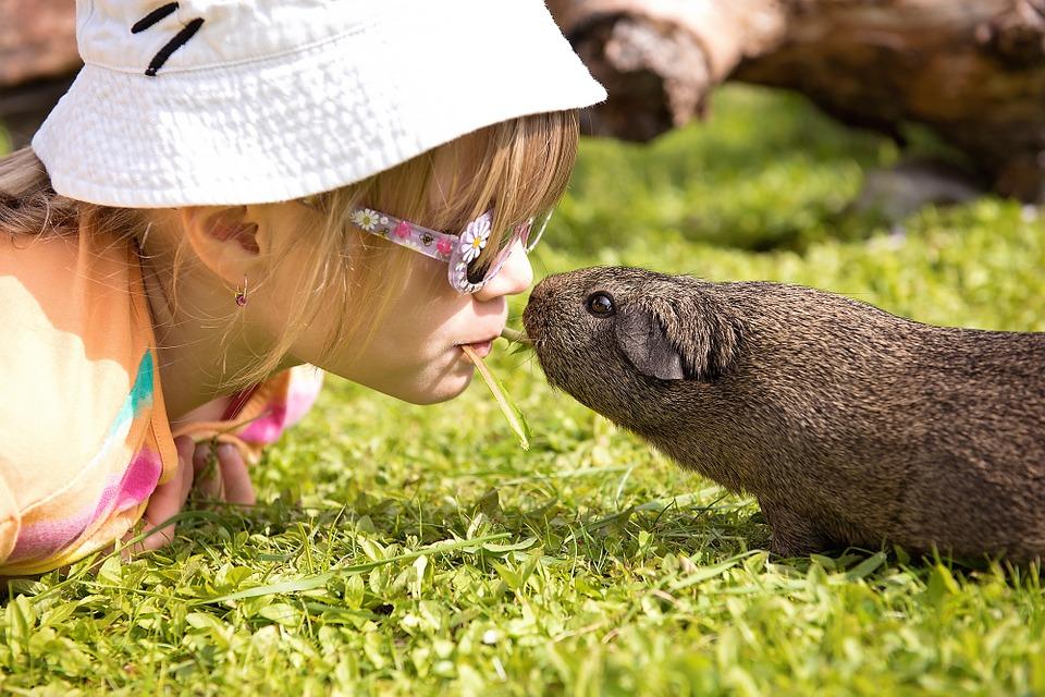Девочка играет с морской свинкой на травке